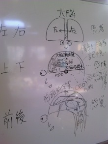 脳の機能と働きの最適化画像